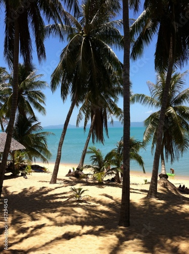 Dream Beach on Koh Samui Thailand with Palm Trees