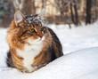 cat on sits on snow