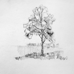 Hand drawing sketch of tree by pencil on a white paper