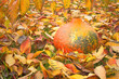 Pumpkin on fallen colorful leaves.