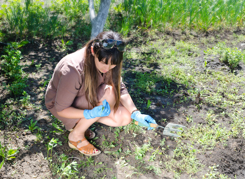 Woman weeding her summer vegetable garden