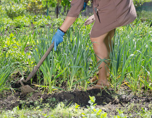 Woman hoeing weeds in the veggie patch