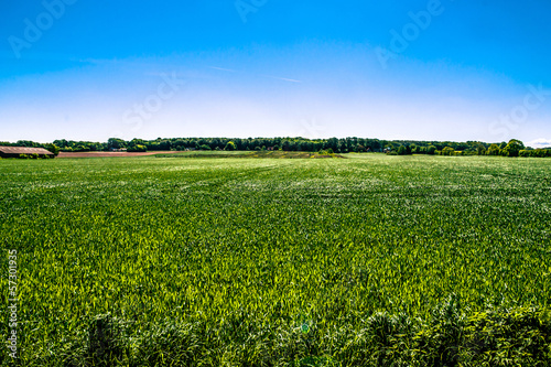 Foto op Canvas Klaprozen Countryside field
