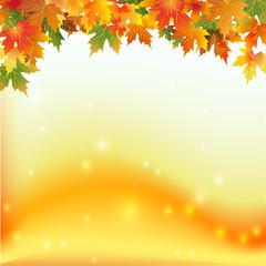 осенние цветные кленовые листья на цветном фоне