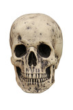 A Spooky Human Skull on a White Background.