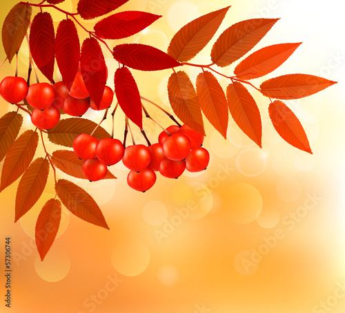 Autumn background with colorful leaves and rowan. Vector illustr