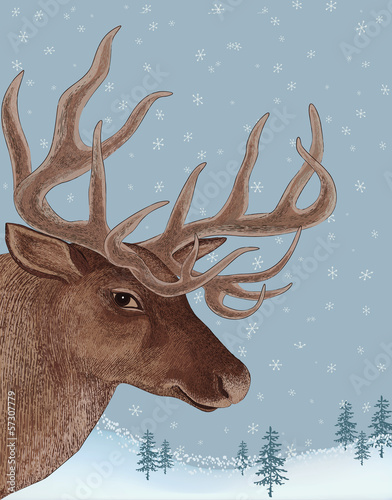 Portrait of deer on snowy background