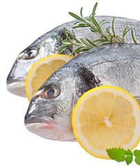 Fresh raw dorado fish on white background
