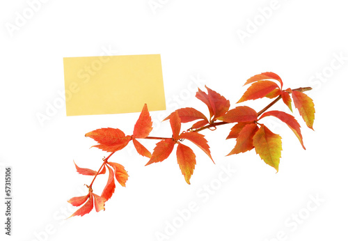 аutumn branch with yellow leaves and a note