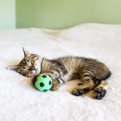Kitten sleeping with a soccer ball