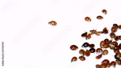 Lot of ladybirds on white