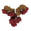 IgG1 monoclonal antibody (immunoglobulin).