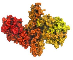 Botulinum toxin neurotoxic protein.