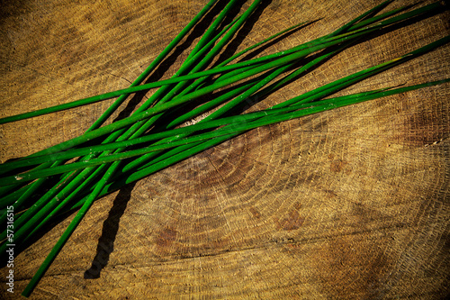 Juncus effusus on wooden table