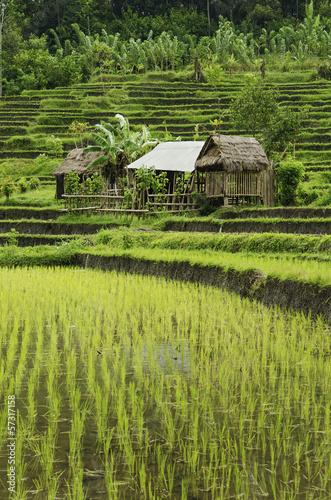 Papiers peints Indonésie rice fields in bali indonesia