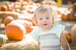 Adorable Baby Girl Having Fun at the Pumpkin Patch.