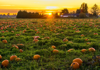 Sunset in Pumpkin Patch