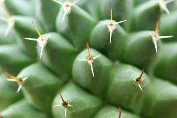 Closeup of beautiful cactus