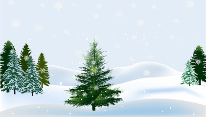 green firs in white snow