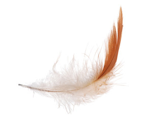 isolated white and orange feather