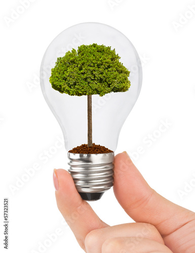 Hand with lamp and tree