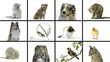 Composition of pets