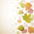 Vector autumnal background
