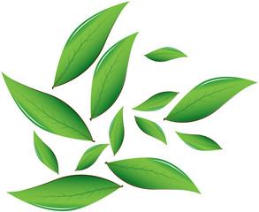 Tea leaves Vector illustration