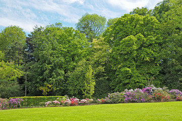 parc in Brussels, Belgium with rhododendrons