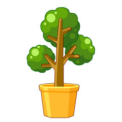 trees in pot isolated illustration