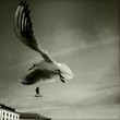 Les ailes du Léman