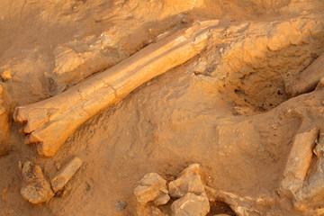 Ancient fossil bonesof extinct mammals