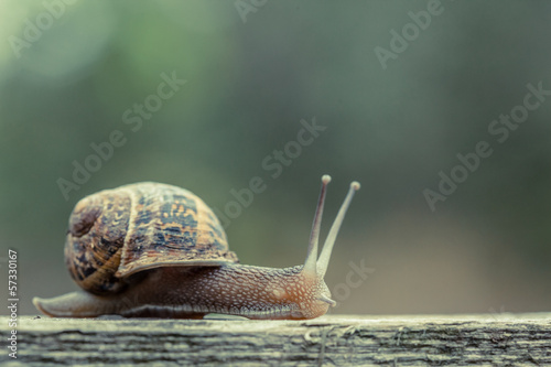 Close up of a small snail - 57330167