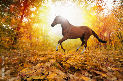 Spoed canvasdoek 2cm dik Paarden Horse in fall park
