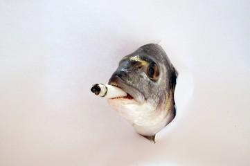 Il pesce fumatore