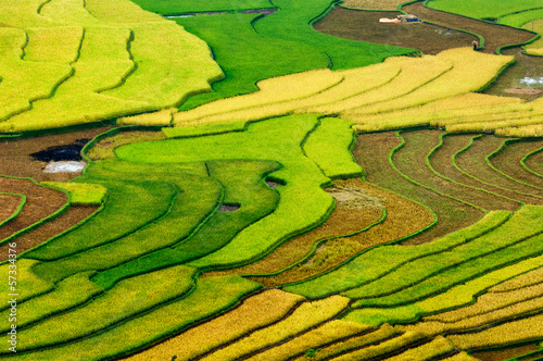 Rice fields on terraced of Mu Cang Chai, YenBai, Vietnam.