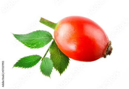 Rose hip. One berry isolated on a white background.