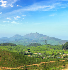 mountain tea plantation landscape in India