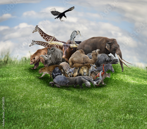 Staande foto Buffel Animals Concept