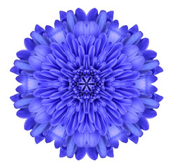 Blue Chrysanthemum Flower Kaleidoscope Isolated on White