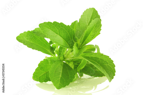 stevia herb closeup in white background