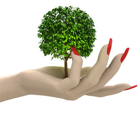 isolated green leafy tree in women hand render