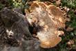 pietra fungaia