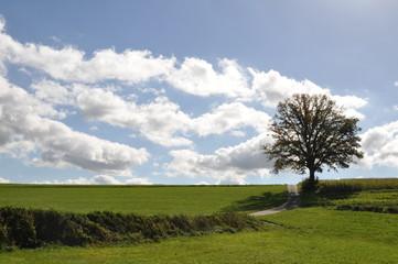 einsamer Baum im Herbst