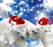 Merry Christmas. Polar bears playing in the snow