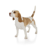 beagle dog - 57350547