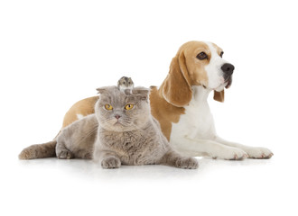 dog, cat and mouse
