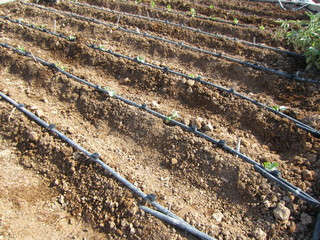 furrow and irrigation