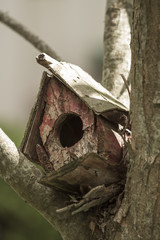 Casa de ave, pájaro en un árbol, vieja.