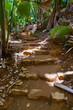 Pathway in jungle - Vallee de Mai - Seychelles